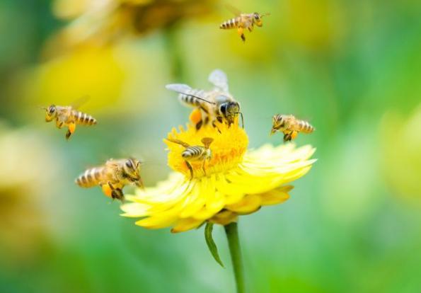 Nauka zdalna (15.06. - 19.06.2020r) - Pszczółki