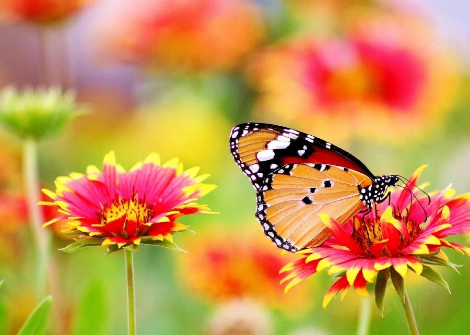 Nauka zdalna (14.04. - 17.04.2020r) grupa Motylki