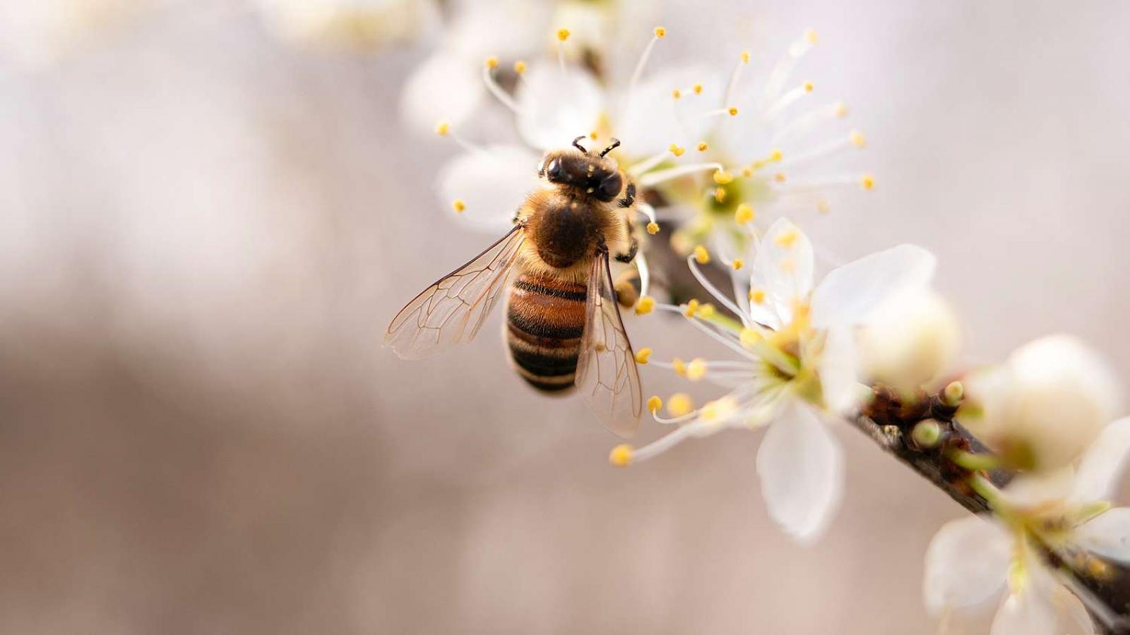 Nauka zdalna (14.04. - 17.04.2020r) grupa Pszczółki