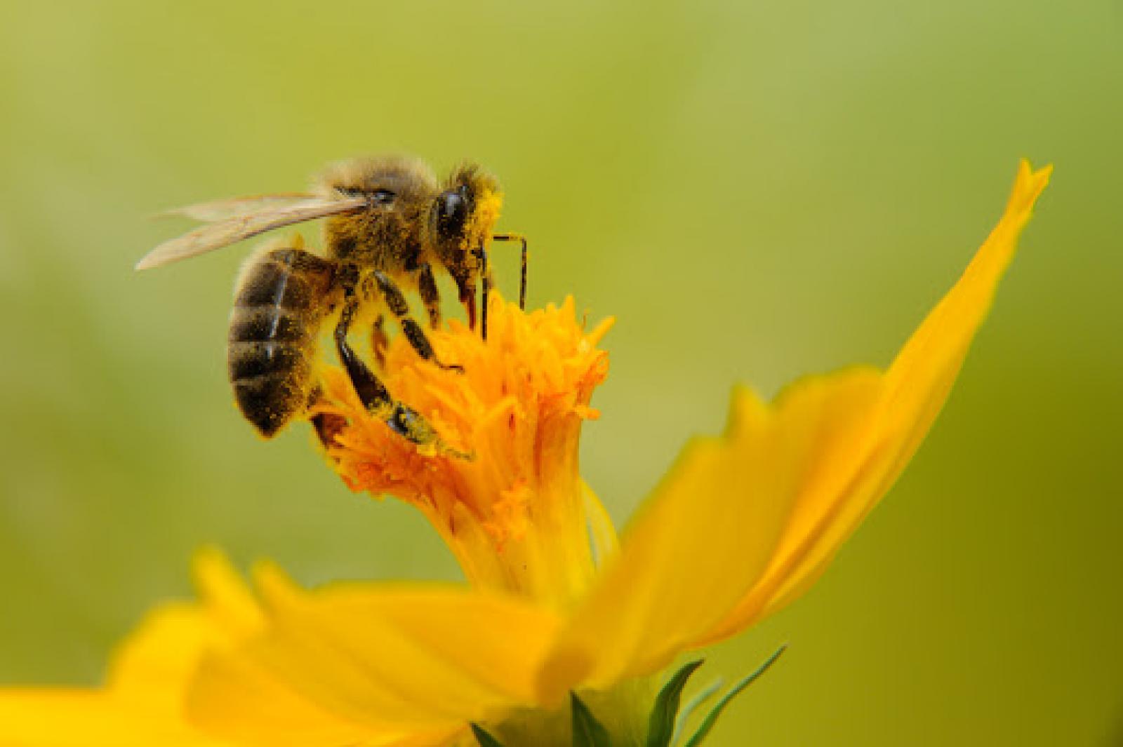 Nauka zdalna (18.05. - 22.05.2020r) - Pszczółki