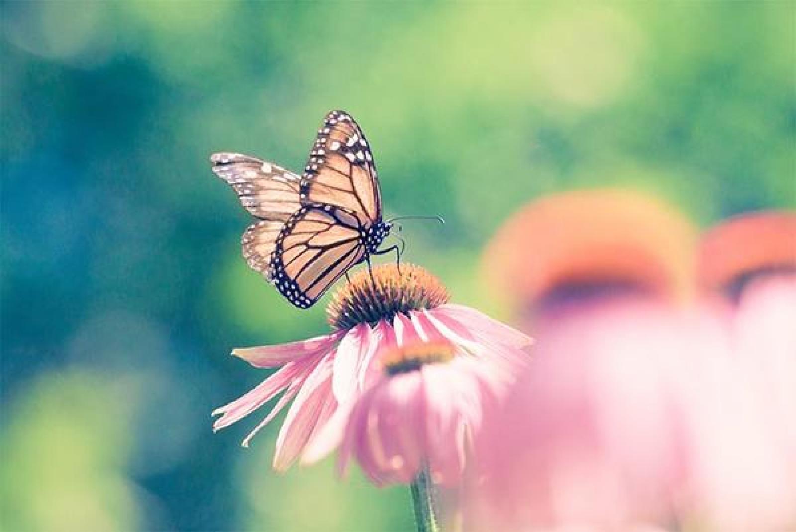 Nauka zdalna (25.05. - 29.05.2020r) - Motylki