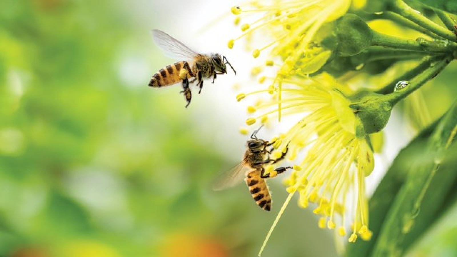 Nauka zdalna (25.05. - 29.05.2020r) - Pszczółki