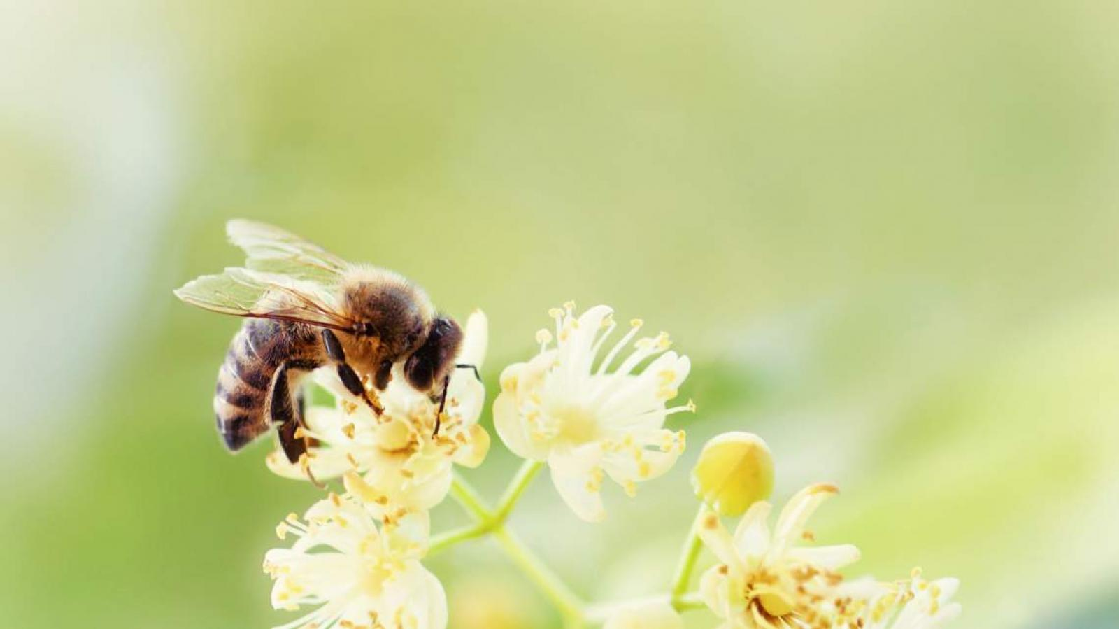 Nauka zdalna (22.06. - 26.06.2020r) - Pszczółki